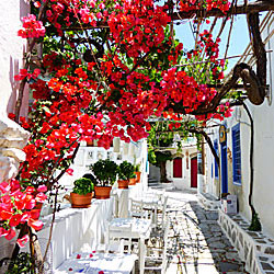 Pictures from Greece.